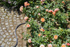 "Шланг Gardena Liano 1/2"" 20м растягивающийся (18435-20.000.00) вид 6"