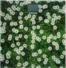 Напольные весы STARWIND SSP2355, цвет: рисунок