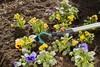 Культиватор Gardena 03132-20.000.00 вид 3