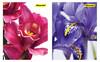 Блокнот Silwerhof 731186-26 40л. клет. А6 Цветы 2диз. картон сплош.уф.лак гребень вид 1