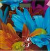Весы SCARLETT SC-BS33E001, до 150кг, цвет: рисунок вид 1